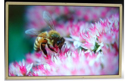 DisplayPort от Samsung