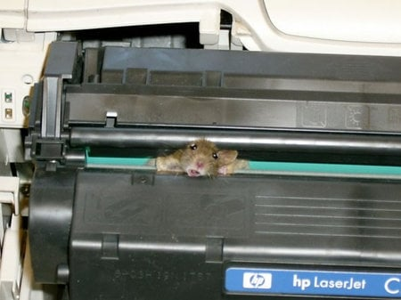Mouse_5