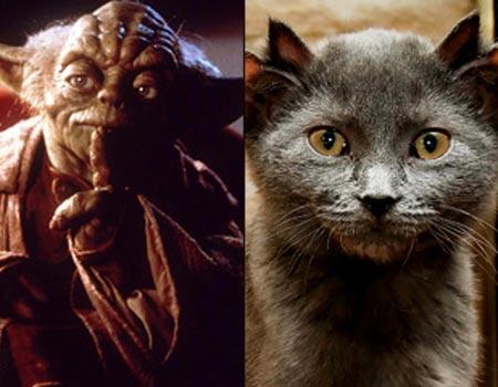 yoda-the-cat