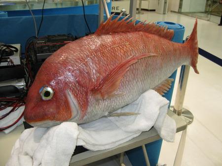 Fish-thumb-450x337