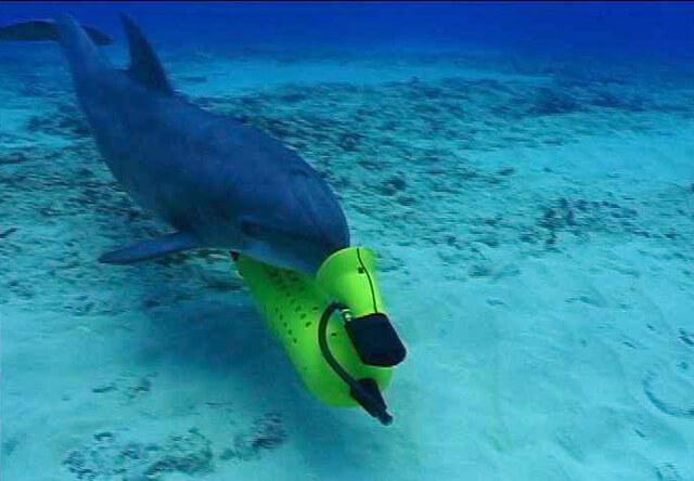 ВМС США заменят дельфинов-саперов роботами