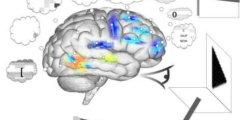 Virtual-Brain