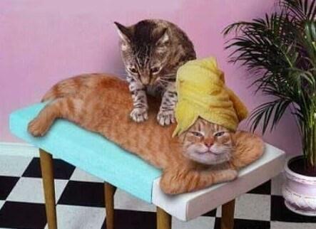 Релаксирующие коты
