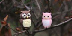 Owl_Driver-image01
