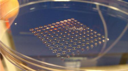 человеческие эмбриональные стволовые клетки