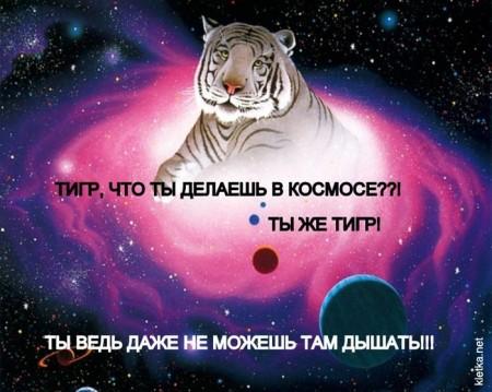 Тигр, что ты делаешь в космосе