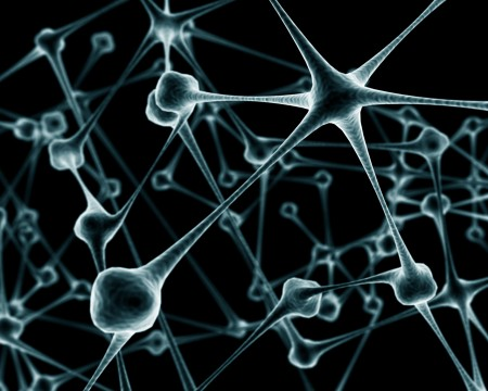 Нейроны и синапсы