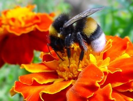 Пчелиное общение