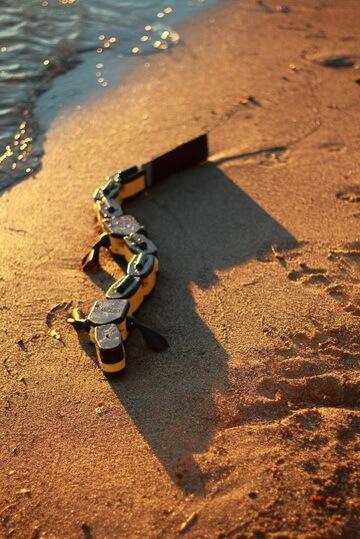 salamandra-robotica-ii-2