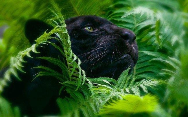 jungle-animal
