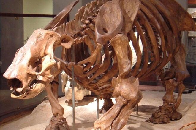 Наземный ленивец