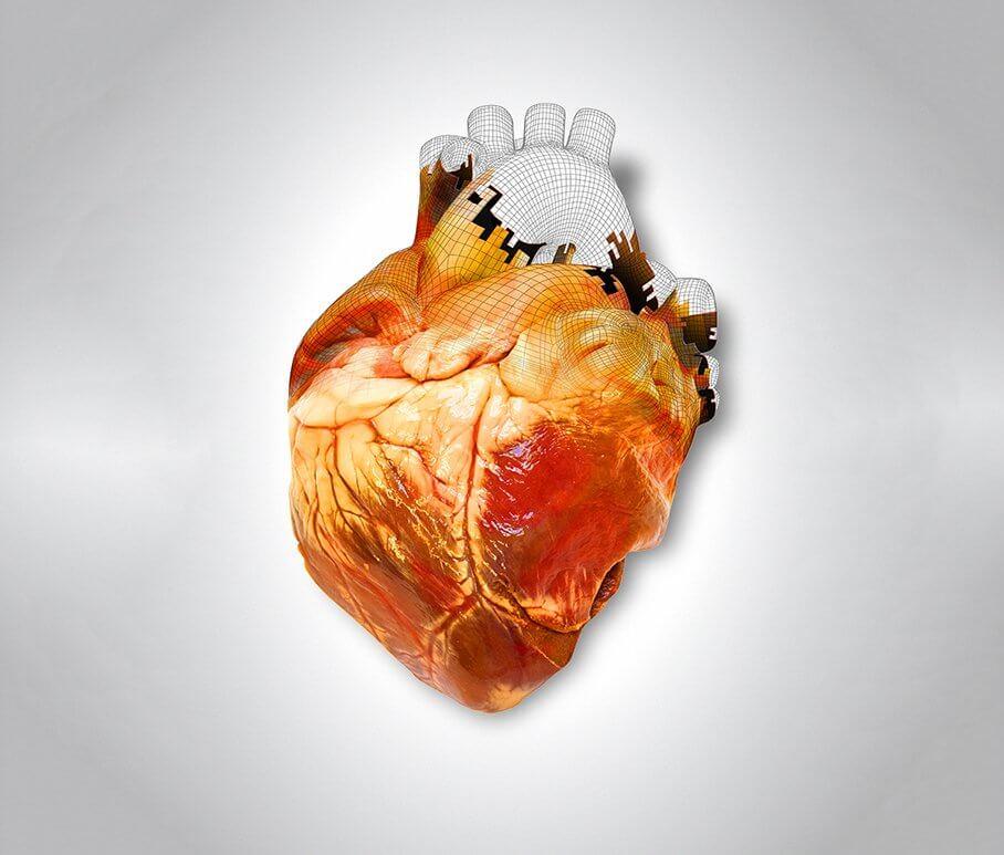 Напечатанное сердце