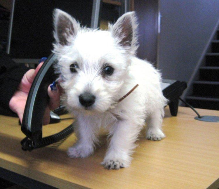 Собака с телефоном