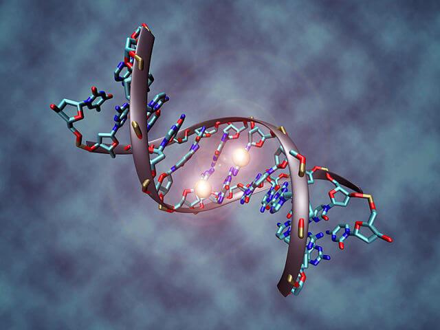 Метилирование ДНК