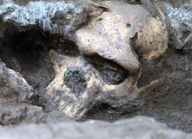 Череп древнего предка человека, найденный в Дманиси, Грузия.