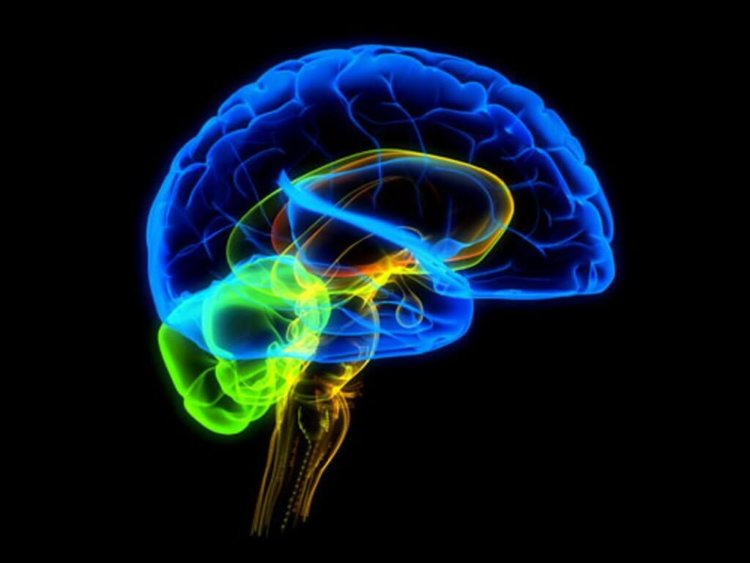 Мозг вырабатывает наркотик в стрессовой ситуации