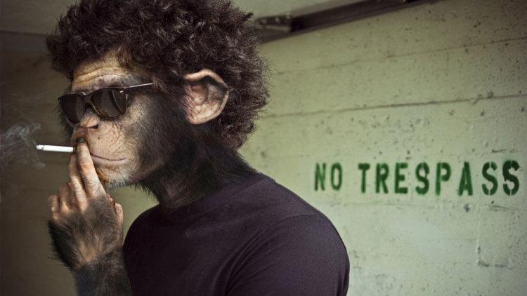 Человекоподобная обезьяна