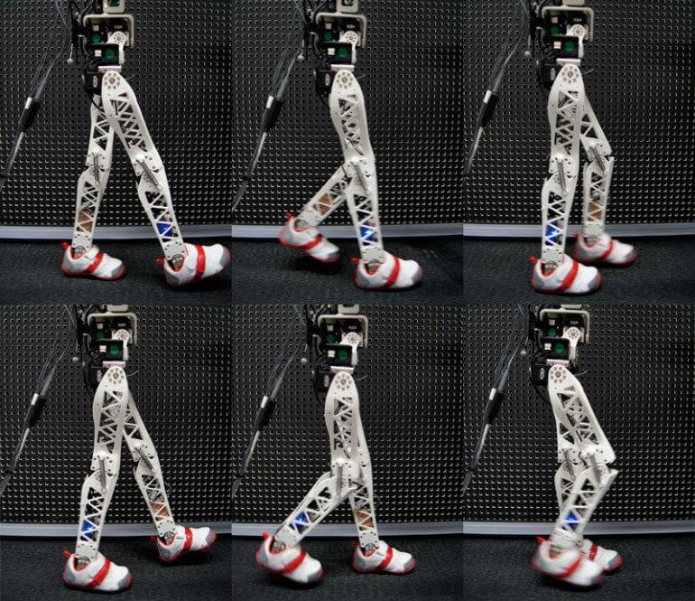 poppy-robot-3