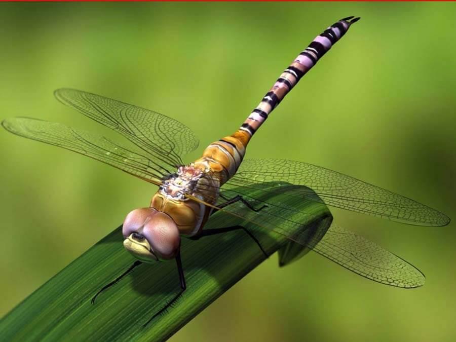 Древнейшие насекомые знали миссионерскую позу во время спаривания еще 165 млн лет назад