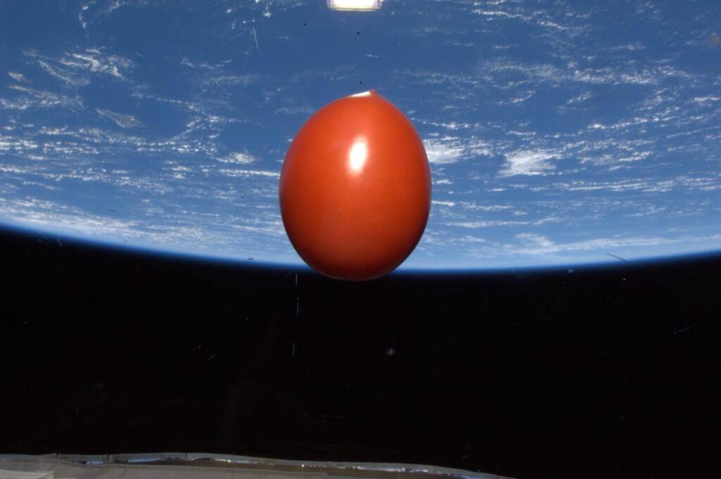 Томат, парящий в космосе, снят японским космонавтом