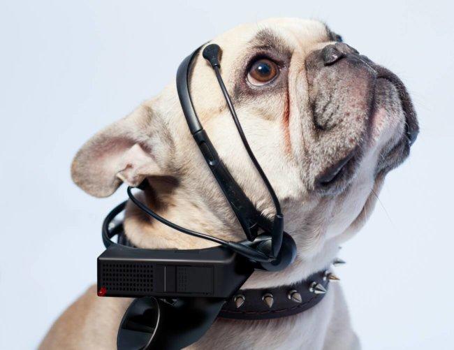 Устройство No More Woof чатет мысли животных