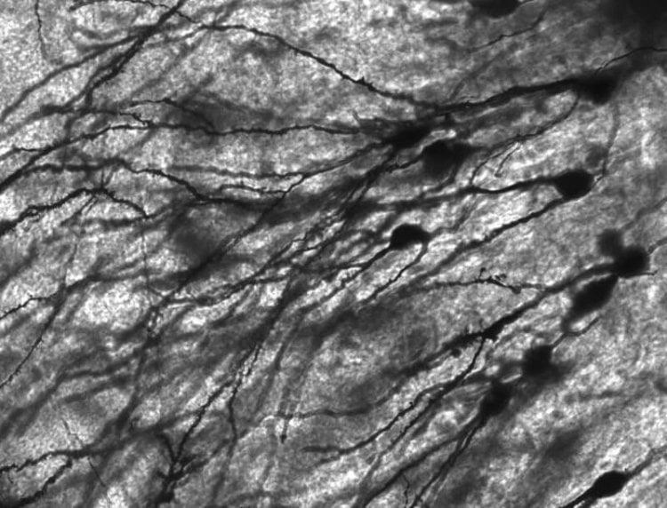 Mirror-Neurons