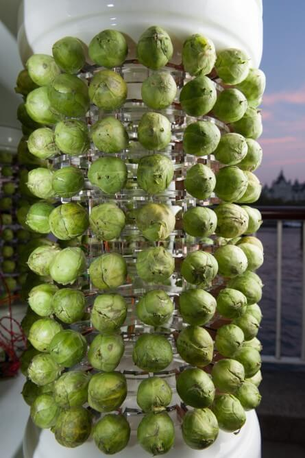 brussels-sprouts-christmas-tree-3