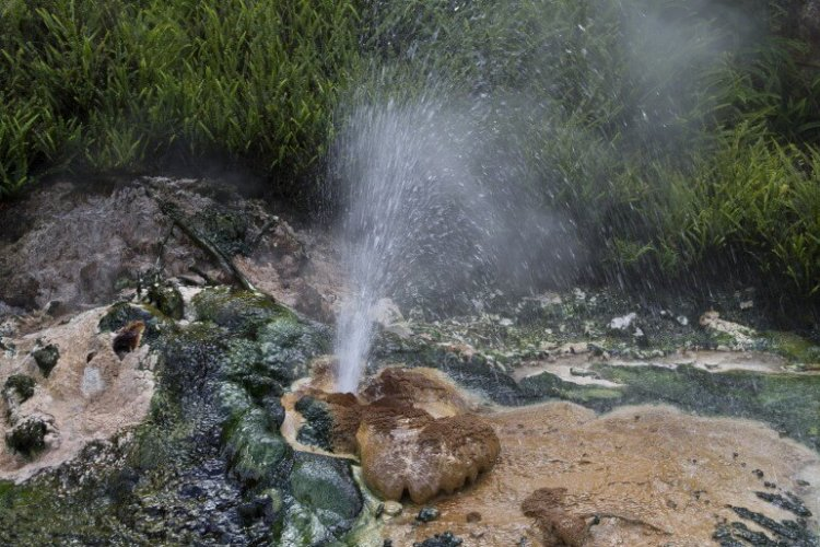 cyanobacteria-hot-spring