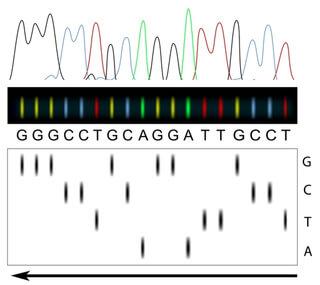Геном