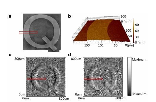 Разница в фото разных микроскопов