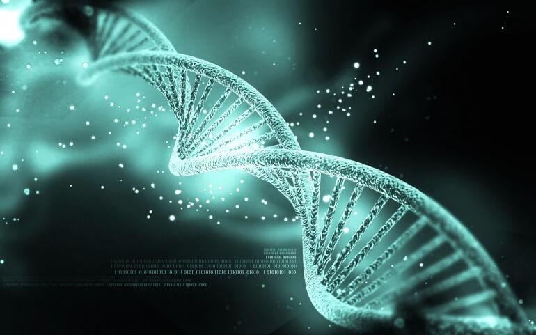 ДНК (DNA)