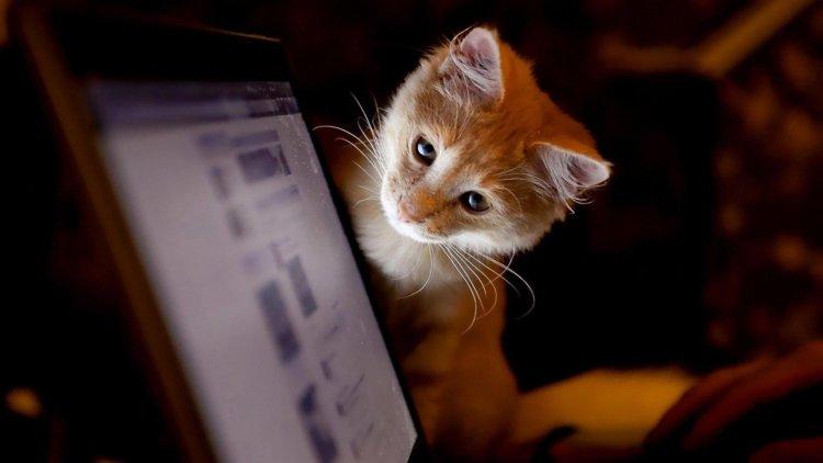 Компьютер и котяшка
