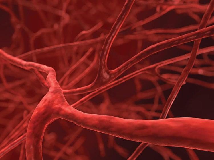 Кровеносные сосуды теперь можно печатать на 3D-принтере