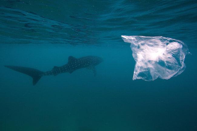 Акула и пластик