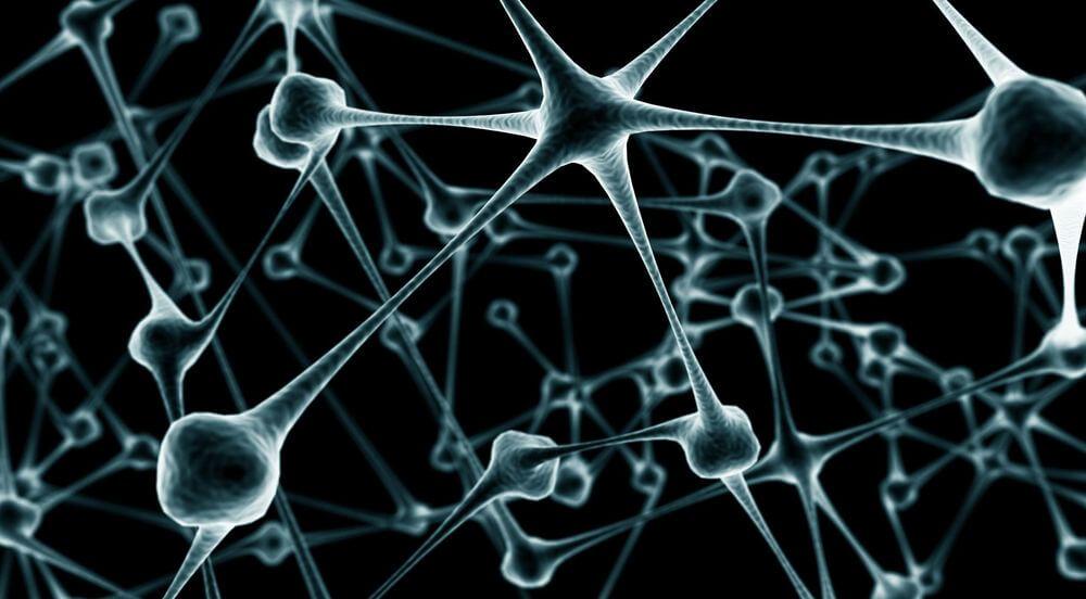 Учёным удалось создать функционирующие нейроны из клеток мышиной кожи
