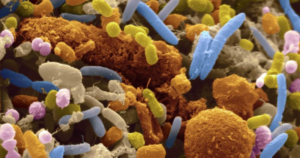 Что вызывают бактерии паразиты