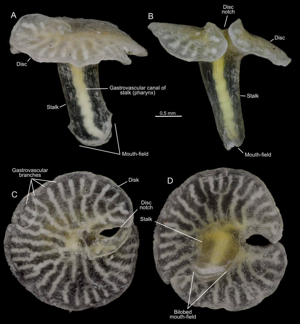 Учёные обнаружили существ, не вписывающихся в существующую классификацию видов