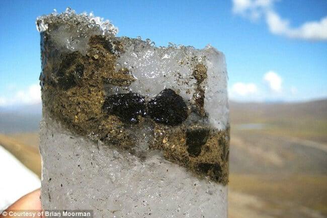 Замороженные фекалии карибу