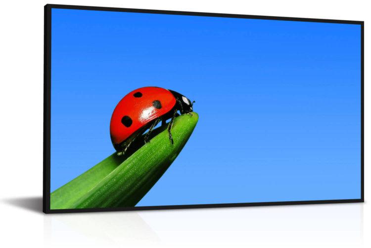 ЖК экран не требующий энергии