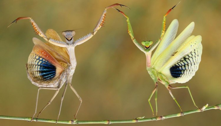 national_geographic_2014_photo_01