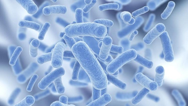 В бактерию записали данные