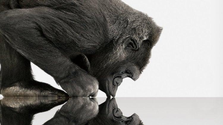 Corning GorillaGlass