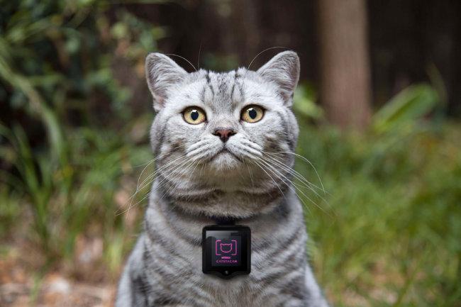 Whiskas Catstacam