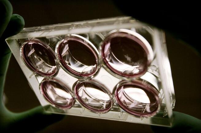 Ученые впервые в истории создали генетически модифицированный человеческий эмбрион