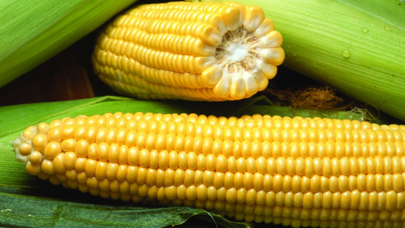 health benefits of corn oil Having a pet as part of your family has many well-documented health benefits read more news not every fat or oil is good for as well as corn and soybean.