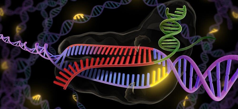 Ученые изменили T-клетки с помощью генетической методики CRISPR