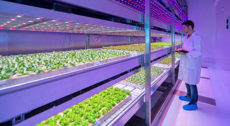 Домашние фермы Philips могут спасти человечество от продовольственного кризиса