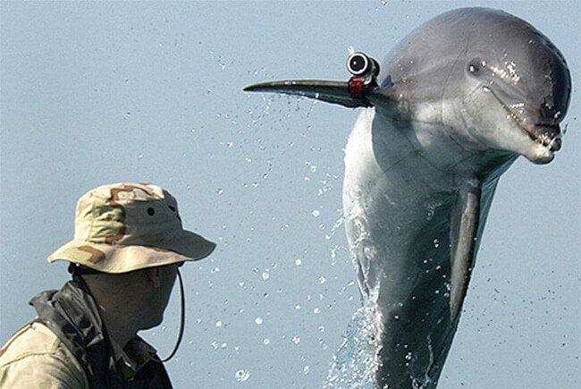 Израиль использует военных дельфинов для слежки за Палестиной