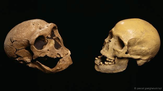 Появление человека на земле и его эволюция видео фото 710-243