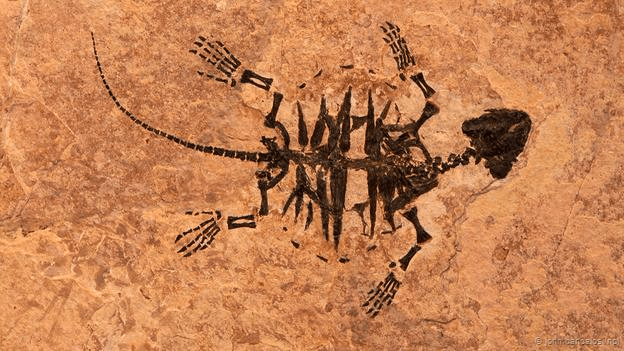 Появление человека на земле и его эволюция видео фото 710-696
